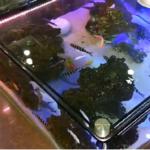 How to Make Fish Aquarium
