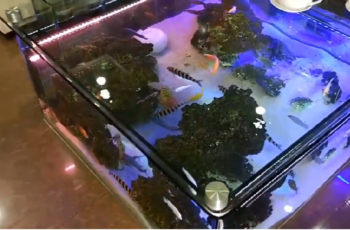 How to Make Fish Aquarium